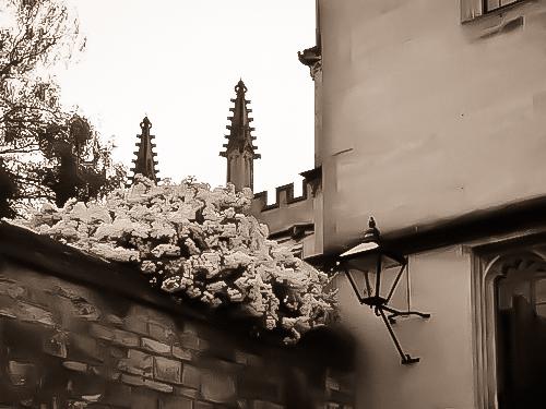 Photo_blog-257