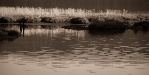 Photo_blog-347