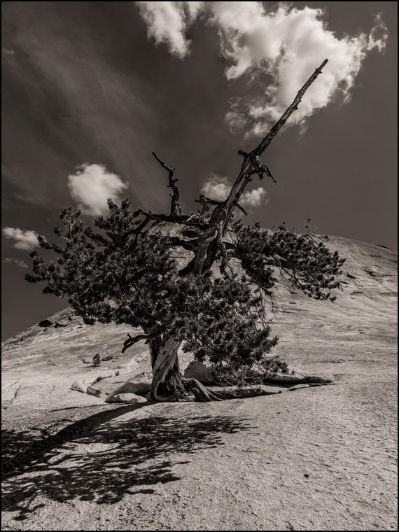 20170416 blog Tree Lembert Dome