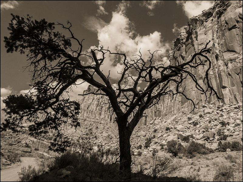 20160828 blog Y tree Capital Reef