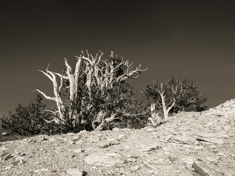 Daily_photograph_0242